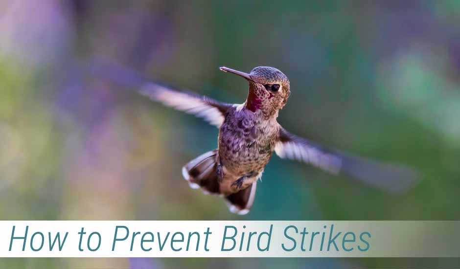 How to Prevent Bird Strikes