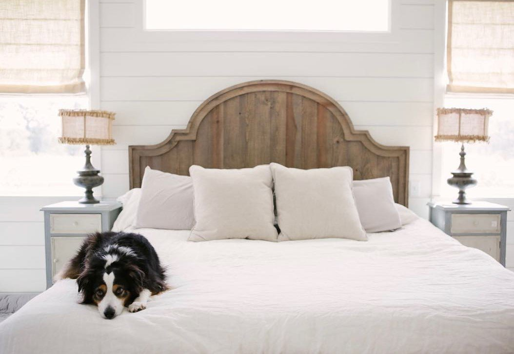 Dog with Roman Shades in Bedroom