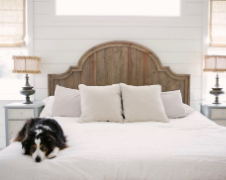 5 Tips to Create a Safe Pet-Friendly Space in Your Home