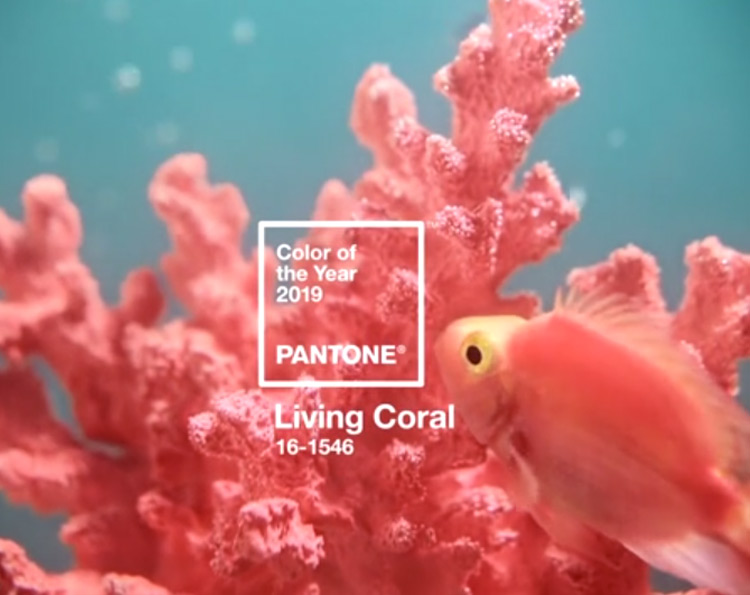 Living Coral: 2019 Pantone Color of the Year